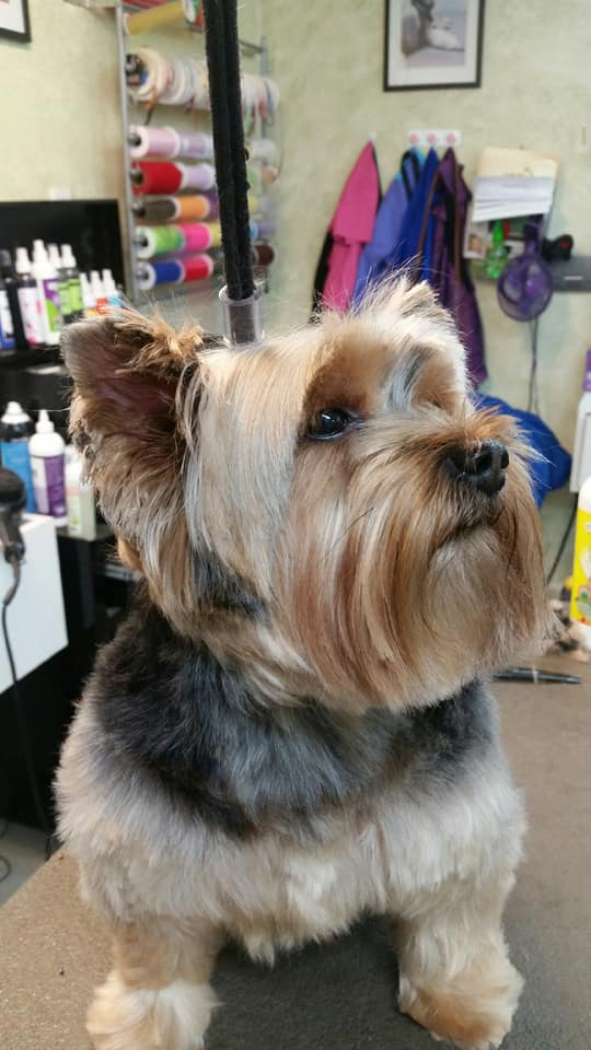 Grooming Pet Styling By Sherry